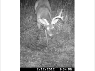 Deer spotted after 2012 season end