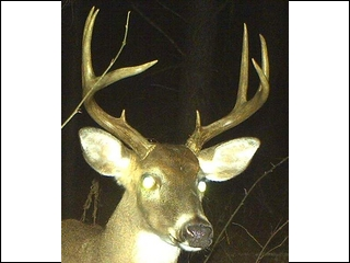 Deer spotted since end of 2012 season
